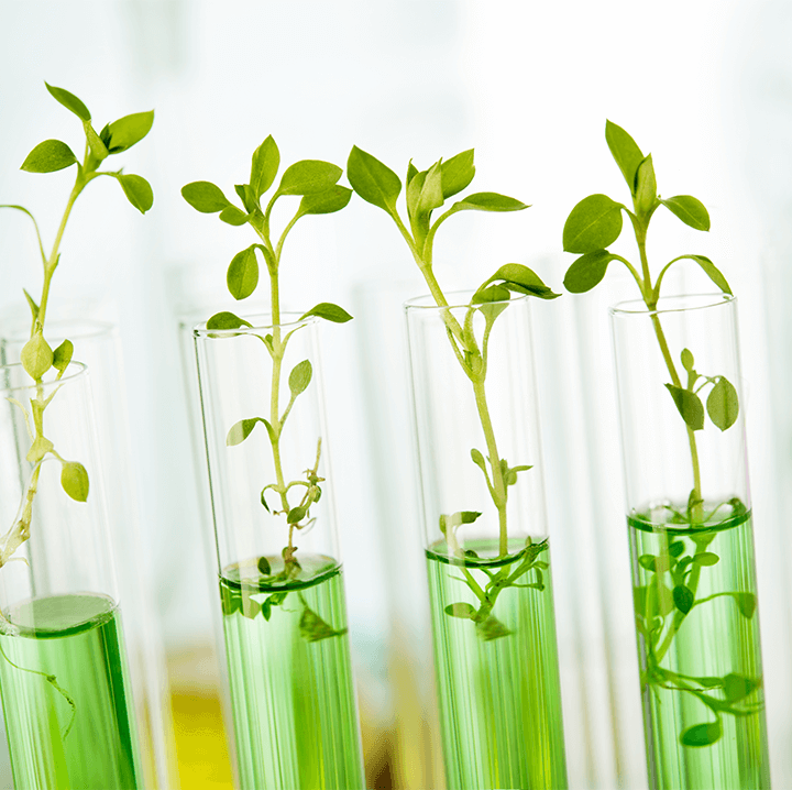 Test tube with plants